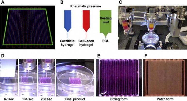 institutul pentru medicina regenerativa
